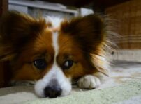 犬の多頭飼いによる喧嘩?開始する時期などの注意点やメリットやデメリットまとめ
