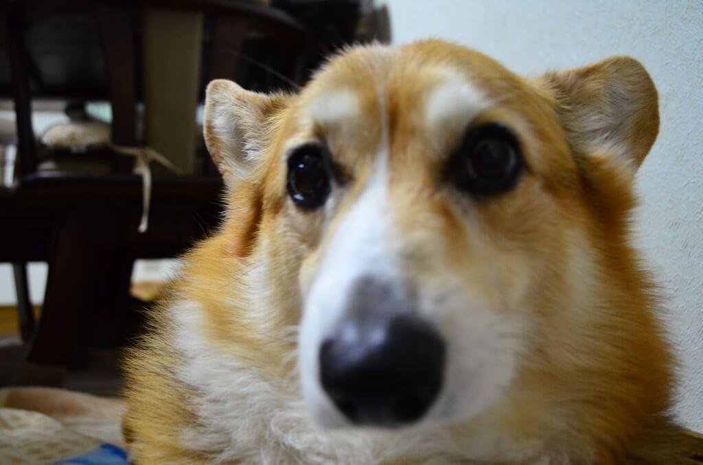 愛犬が風や雷・花火の音を怖がる?
