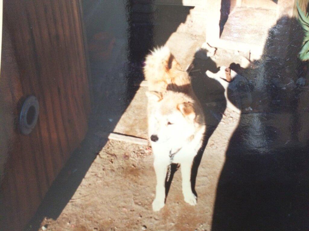 先代の雑種犬チャコが5歳で死んだ悲しみ
