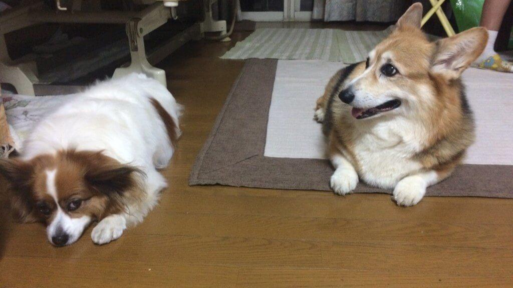 犬の多頭飼いは大丈夫?開始する時期や気をつける事とは?