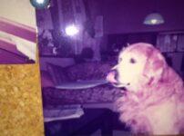 犬が立て続けに死んだ悲しみから立ち直った出来事とは?