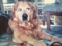 犬の十戒を守れた?虹の橋に行ったジョンくんの最期は犬と私の10の約束と同じ世界でした