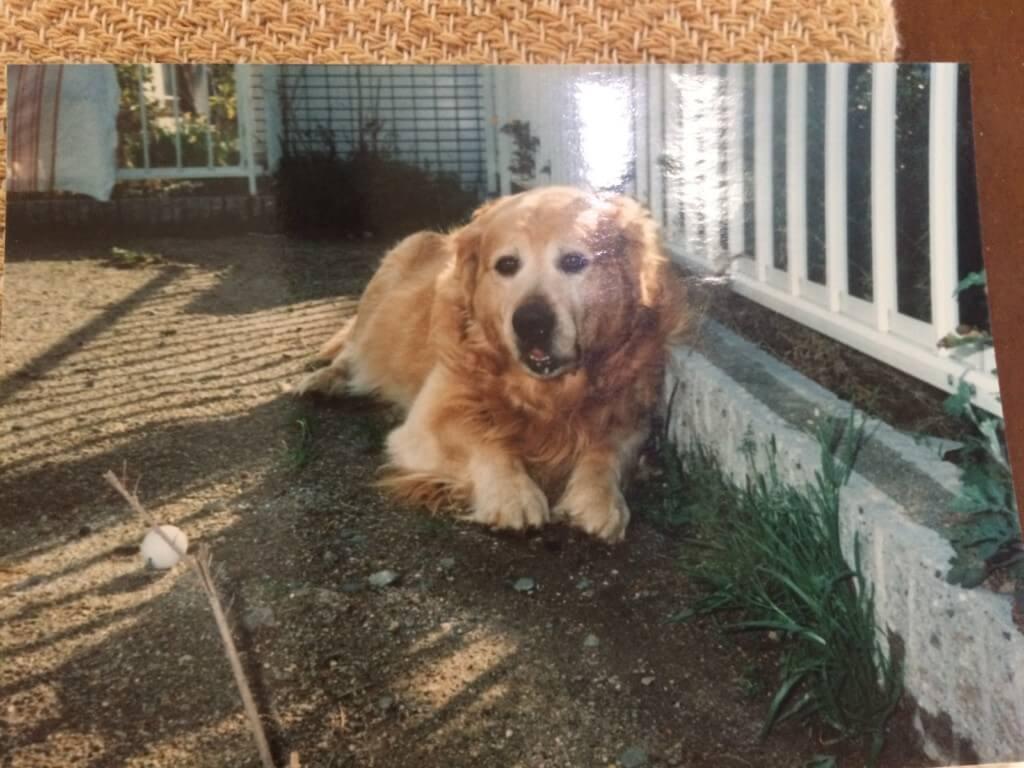 ある日突然、愛犬ゴールデンレトリバーのジョンくんの体調が悪くなった