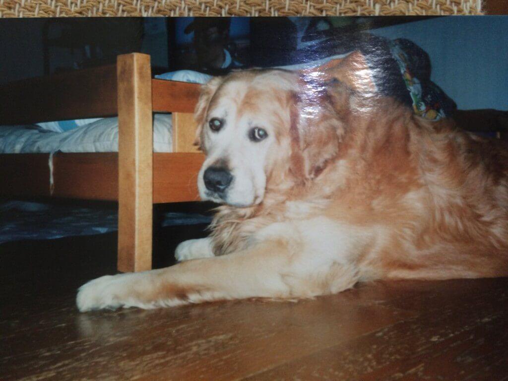 愛犬のジョンくんの最期はまるで映画の犬と私の10の約束と同じ境遇体験でした
