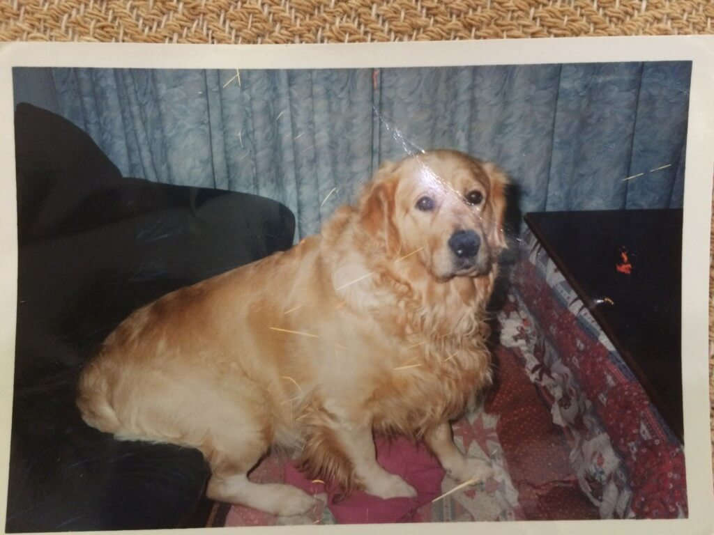 苦しそうな愛犬のゴールデンレトリバーのジョンくんの変わり果てた姿に涙が止まらず、撫でてやるのが精一杯でした