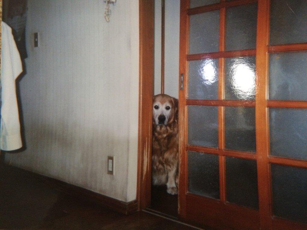 犬の十戒、虹の橋のお話。ペットと飼い主との強い絆で、涙するお話ですよね。