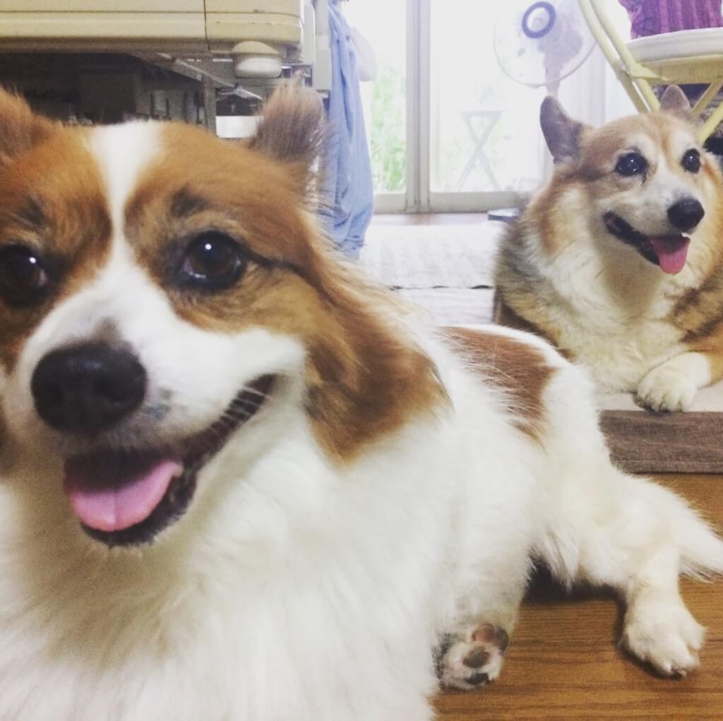 愛犬が経験した「犬の急性膵炎」の原因や症状、診断、治療法から入院期間は?