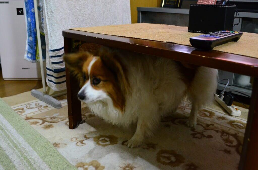 犬が食べてはいけないもの(与えてはいけない)は?