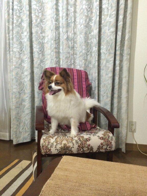 犬が足をなめるのをやめさせる方法