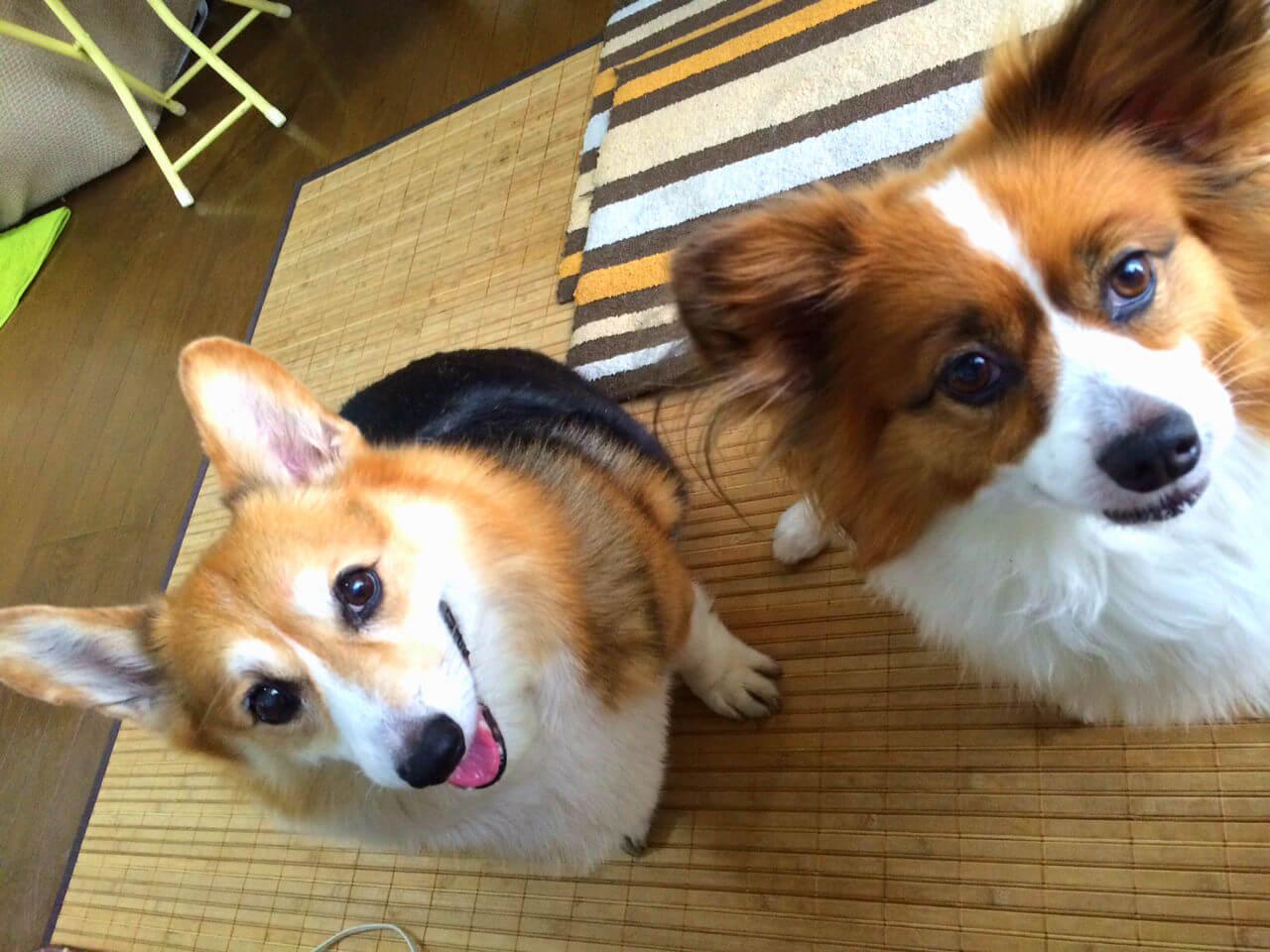 海桜 カイサクラ 愛犬 ブログ