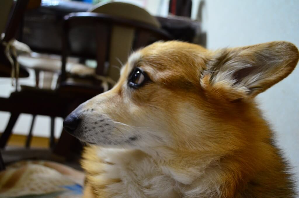 犬の唾液には細菌が多いから心配です