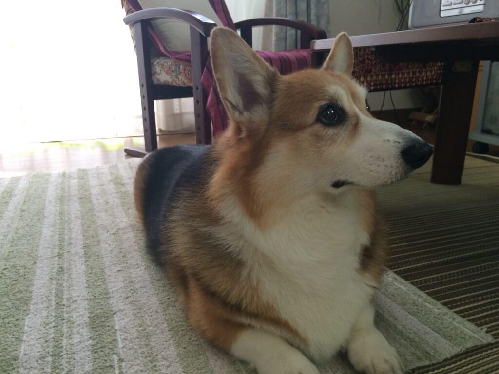 暑さのせいで多頭飼いの犬がケンカをするようになっている