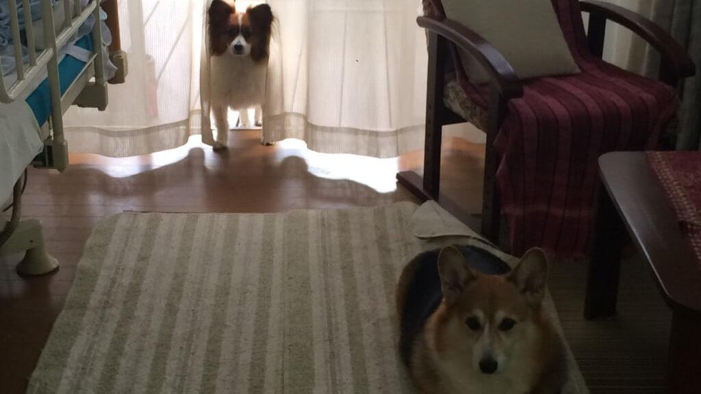 ポケモンGOを犬の散歩中にプレイすると効率的に集めれるの?