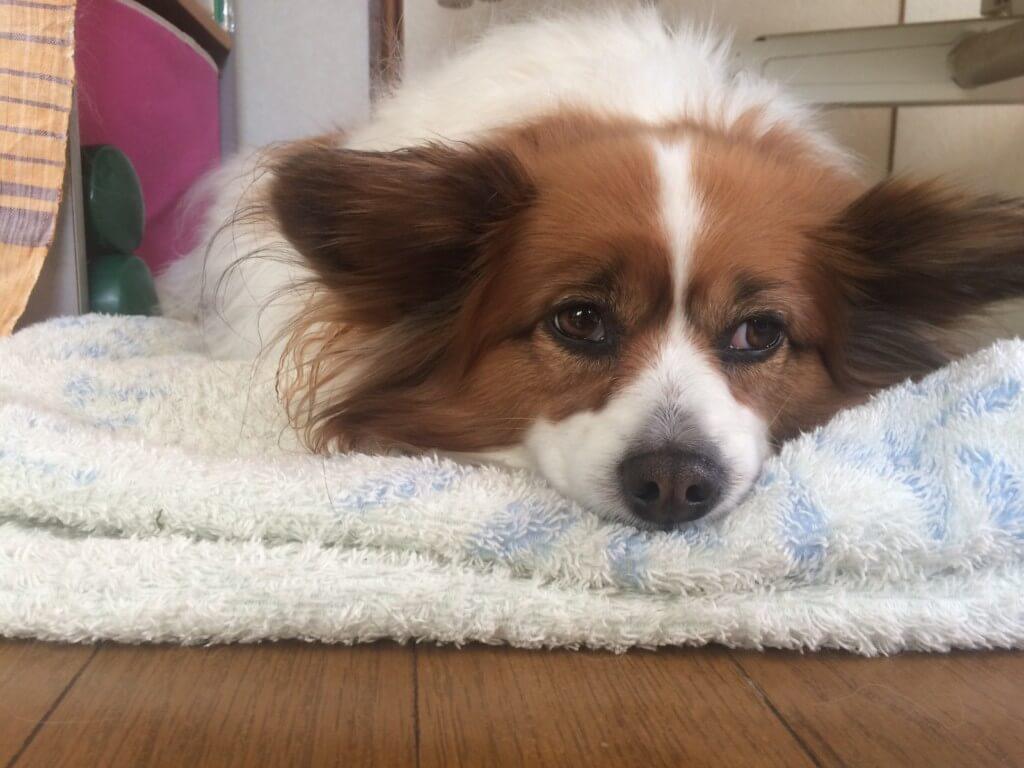 まとめ ノミやマダニの駆除・予防薬は愛犬のライフスタイルに合わせて選びましょう