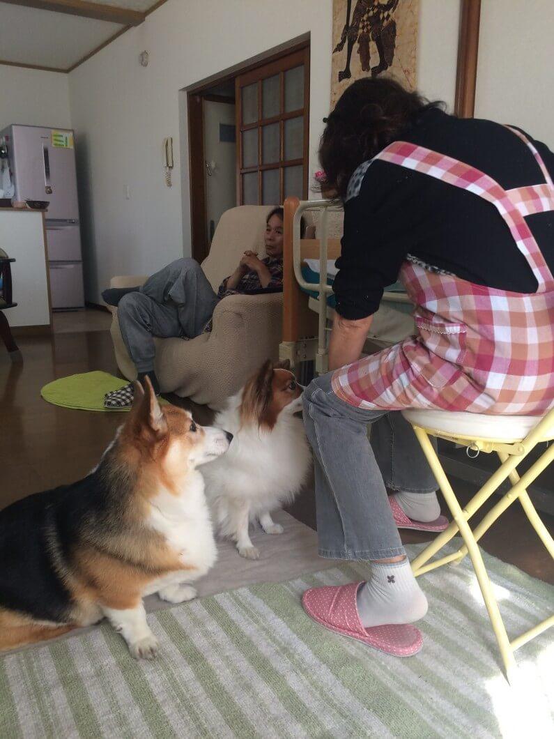 まとめ カナガンドッグフードは合う犬と合わない犬がいるのでお試しで様子を見て変えましょう