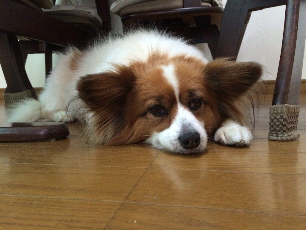 まとめ 犬の熱中症の症状や原因を覚えて対策をしましょう