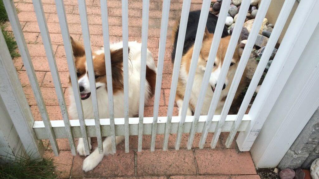 【危険】犬の熱中症はパンティング!友達の犬がなった症状や応急処置まとめ