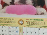 【早見表あり】犬の年齢の数え方!人間に例えると何歳?計算式などまとめ