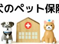 犬のペット保険の選び方!資料請求をして比べてわかった選ぶポイントまとめ