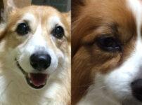 犬のストレスサインとは?飼い主さんが知っておきたい原因と解消法まとめ
