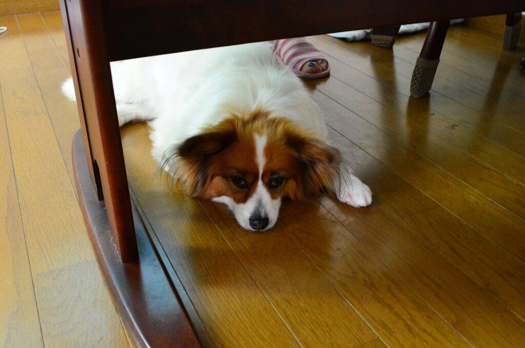 犬が針金(ハリガネ)を誤飲しまう原因と注意点は?