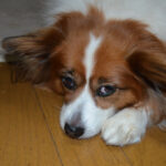 犬が誤飲したかも?ビニール付きの針金を誤飲したけど注意点や原因と対処法のまとめです