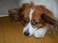 犬が誤飲?実際に愛犬がビニール付きの針金を誤飲したのでわかった原因と対処法とは?