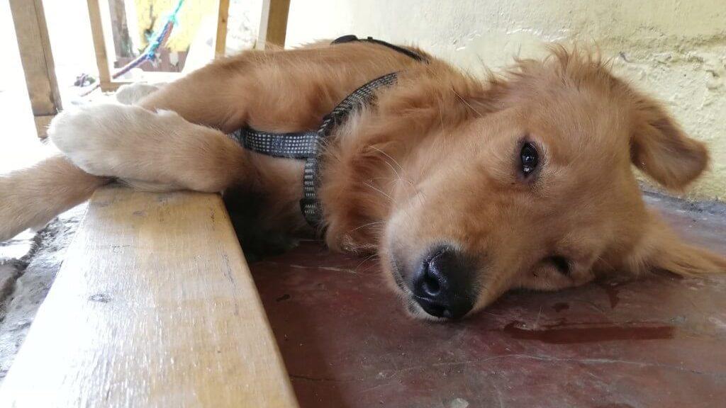 浜ちゃんも夢中のAmazonのライオン犬のCMにロングバージョンがあるって知ってます?