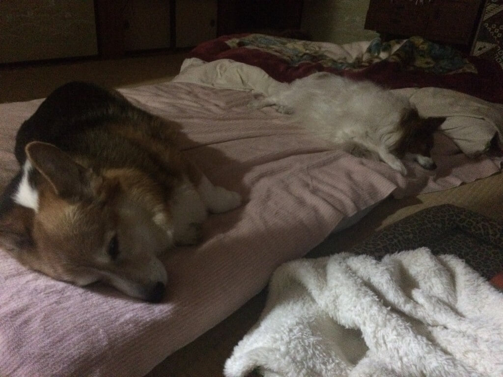 まとめ 犬もサプリメントで大切な愛犬と少しでも長く一緒にいられるように