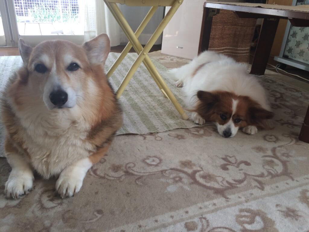 雨の日でも飼い主さんが「犬のお散歩」に行くべき理由とは?