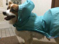 雨の日の犬のお散歩は?買ってよかったおすすめグッズやお散歩の後の犬別ケア方法まとめ