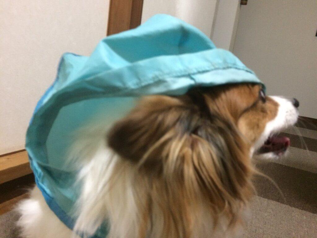 雨の日でも安心のおすすめの犬のお散歩グッズ