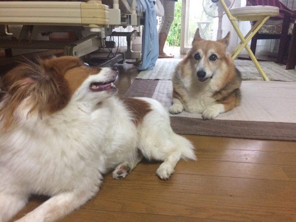 まとめ ロイヤルカナンのドッグフード風評はいっぱいありますがアナタの愛犬にあっていれば大丈夫