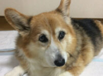 老犬になってご飯を食べない時は要注意!愛犬に試してみた色々な対応や原因を紹介します