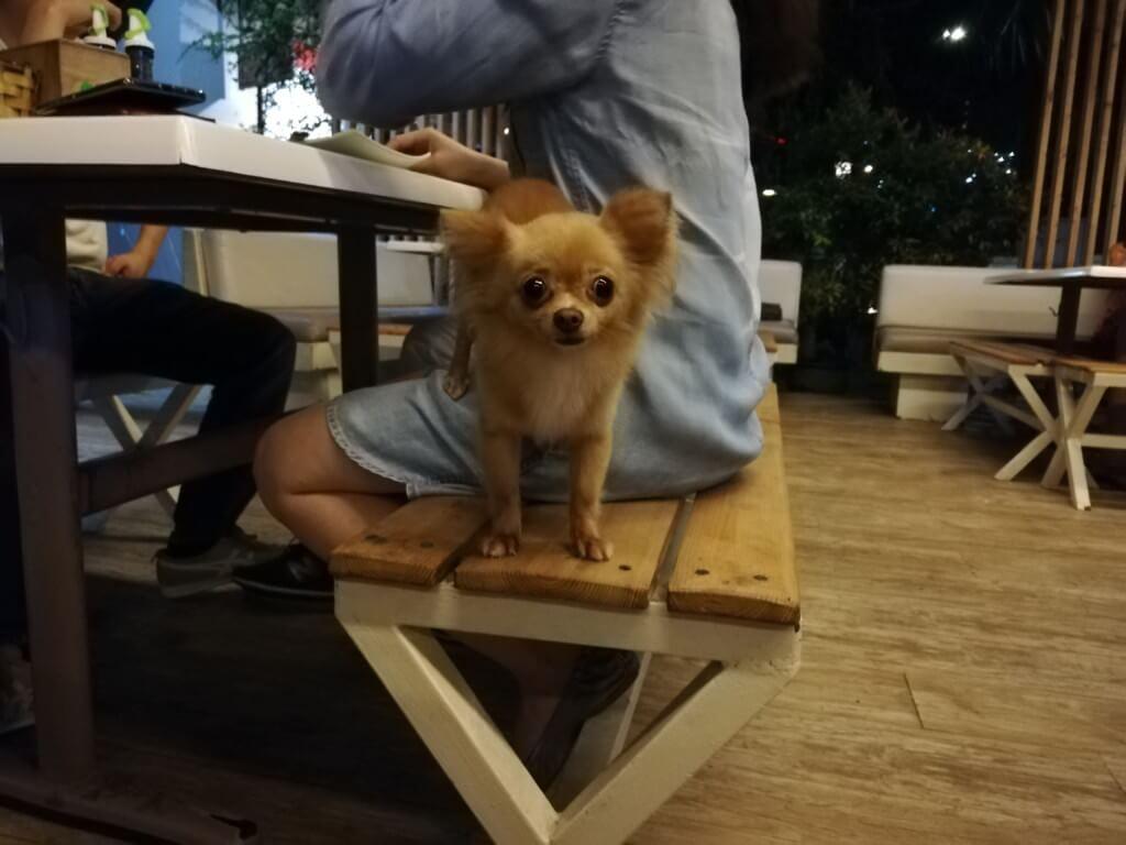 犬がうんちを食べる(食ふん)のを止めさせる対策