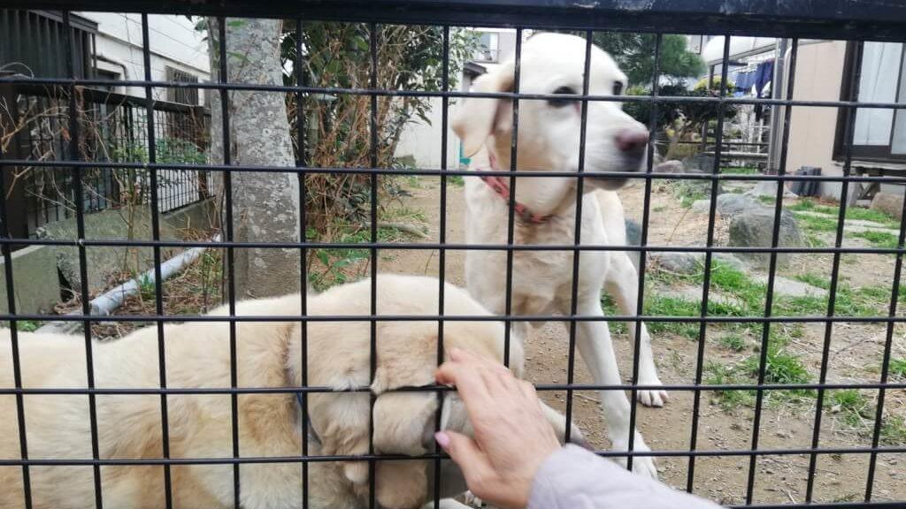 犬がうんちを食べる理由は?仔犬の時に食糞した経験から原因や対策を紹介します