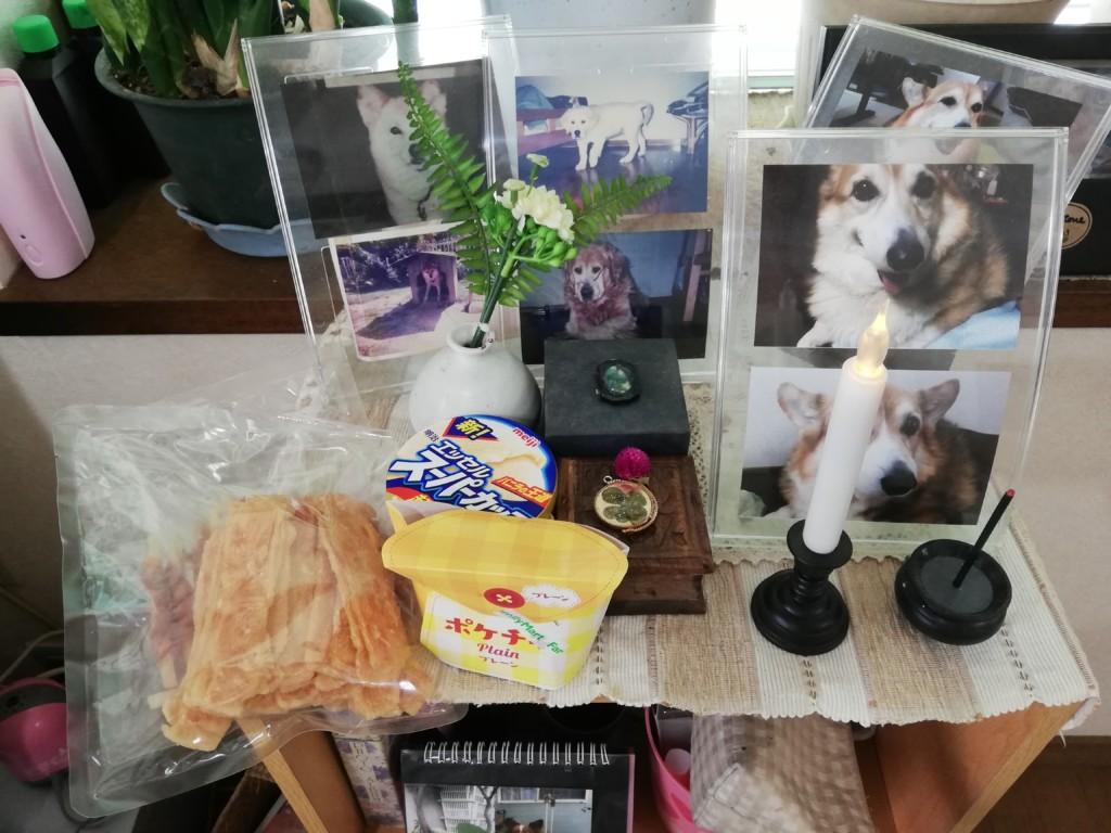 愛犬のカイくんの一周忌でお供え物は大好きなジャーキと最期に食べれた唐揚げとアイスクリーム